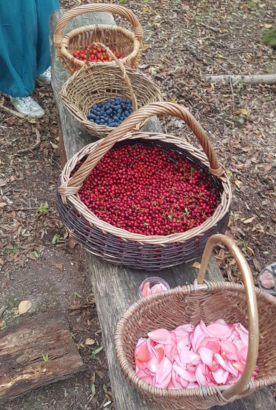 autumn foraging berry baskets