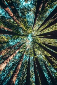 Join us for Forest Bathing in East Sussex