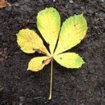 Leaf Multiplication
