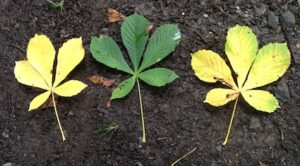 3 leaves have 15 leaflets