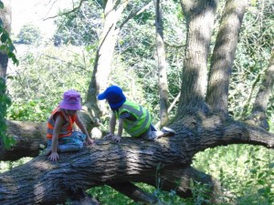 Find out about forest school sessions for your school or nursery