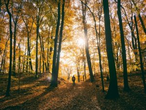 National Tree Week and Forest Bathing