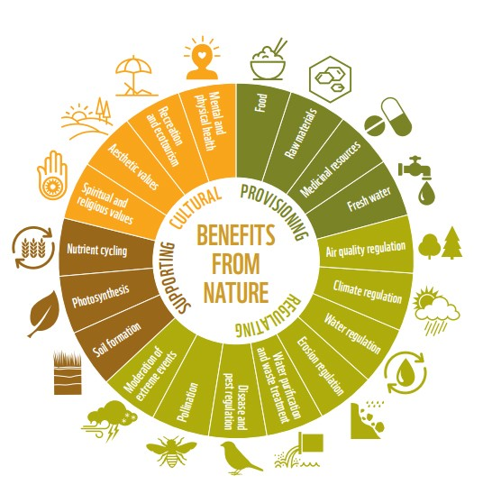 The Importance and Benefits of Nature to our Lives
