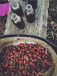 Plant Power! Autumn Foraging & Wild Medicine