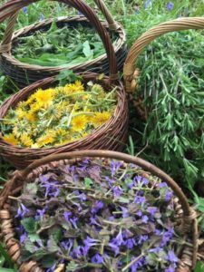 Plant Power! Spring Foraging & Wild Medicine