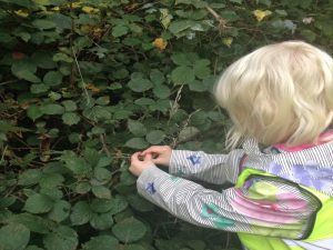 Picking blackberries for paint! Outdoor Classroom Day 2018