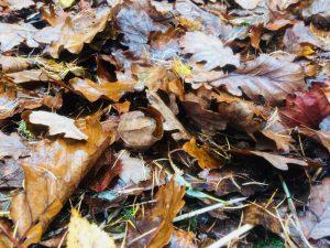 Our Teenage Woodland Programme