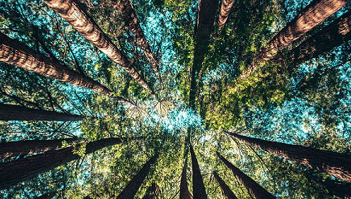 forest bathing for NHS away days